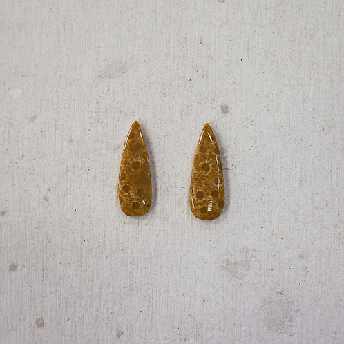 BFF coral fossil gems