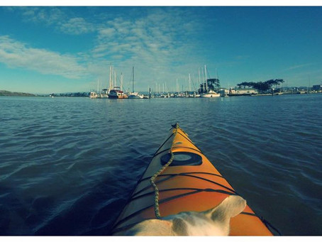 Winter is a great time to spend kayaking or canoeing on the Elkhorn slough!