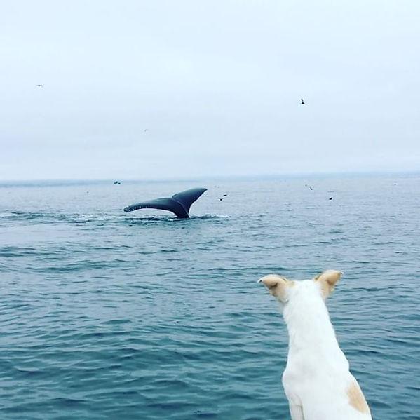 More whales 😀💕🐬🌊#mosslanding #scubad