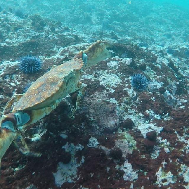 Underwater photography!