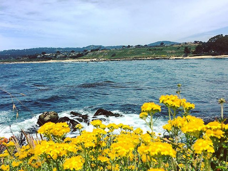 California is opening up, time to take a dive in the Monterey Bay!