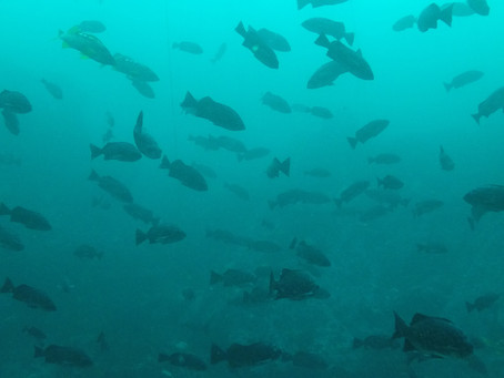 Diving the Central Coast