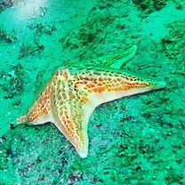 #Starfishday