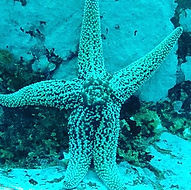 Starman 😀#scubaday #starfish #scubadivi