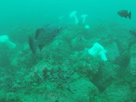 New dive spot 3 miles North of Moss Landing!