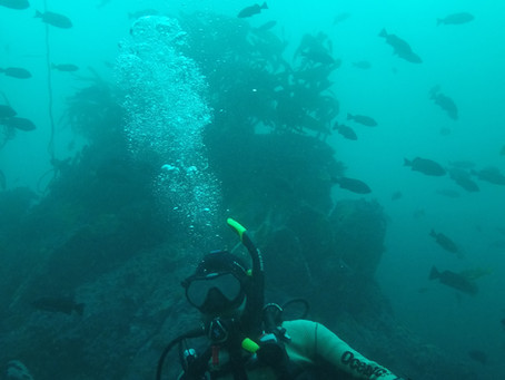 Point Joes dive, epic!