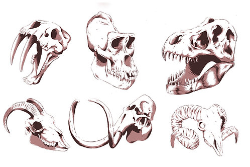 Skulls of the Past