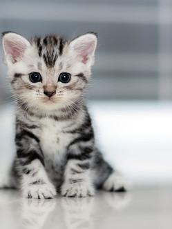 Nine Lives Kitten Rescue