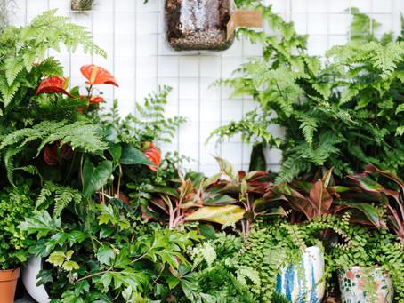 Plants, Plants, & More Plants