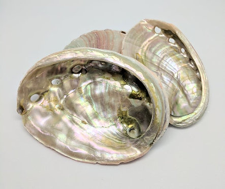 Small Abalone Shell (3 inches)