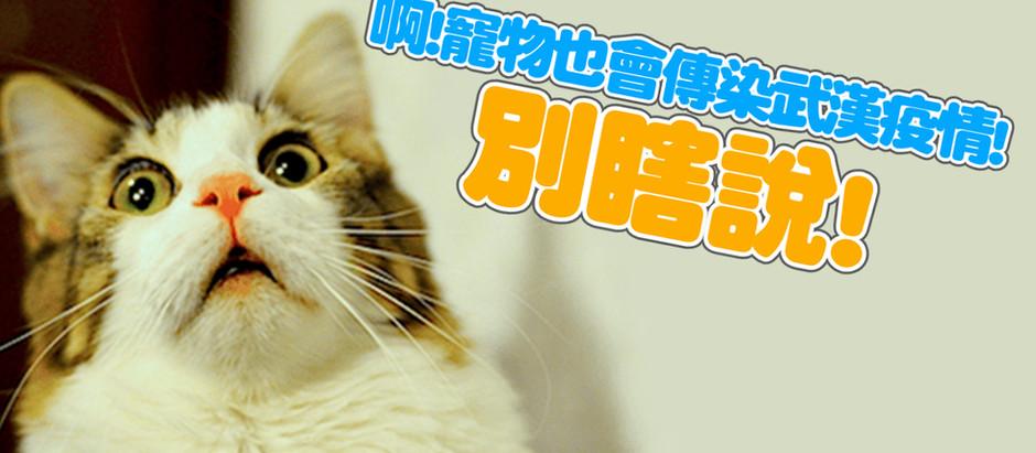 啊!貓狗寵物會傳染武漢疫情,別瞎說!!