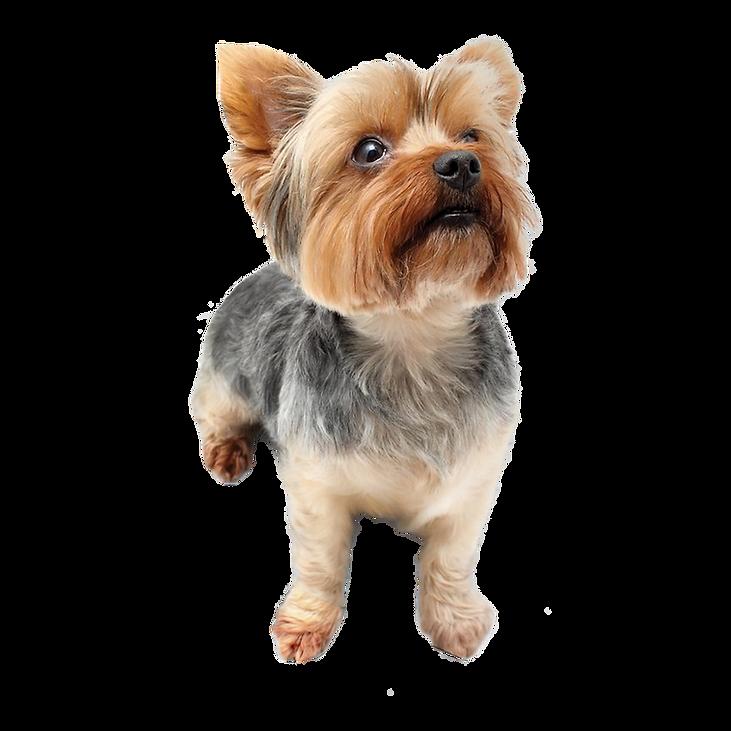 小型犬.png