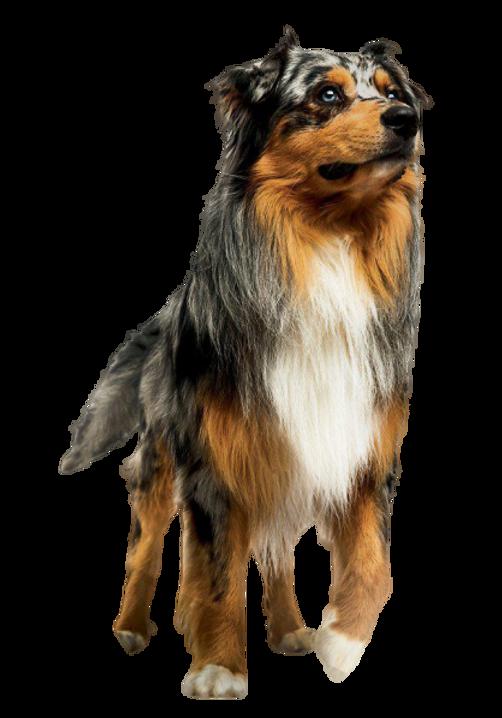 高齡犬.png