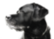 [nulo.com][12]dog-footer.png