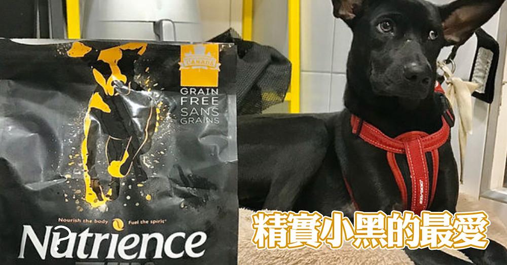 精實小黑的最愛,紐崔斯真可說是養狗人士最愛的品牌之ㄧ,常常有許多朋友都會為了愛犬尋找一款好飼料,來找小編群諮詢相關寵物營養,如果你家有毛小孩,快來體驗一下吧。