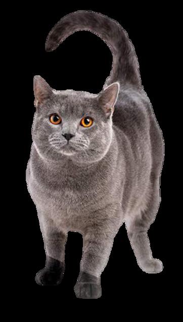 高齡貓.png