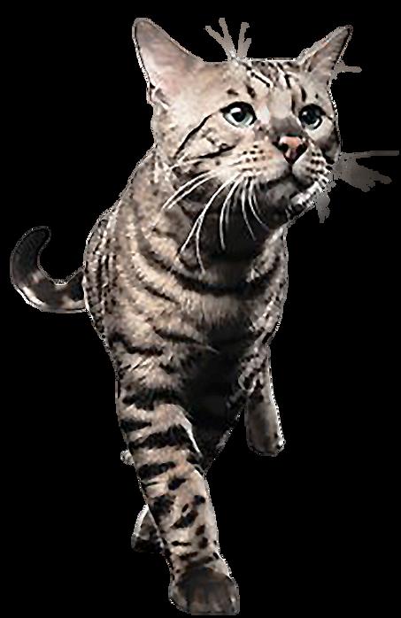 纖體貓.png