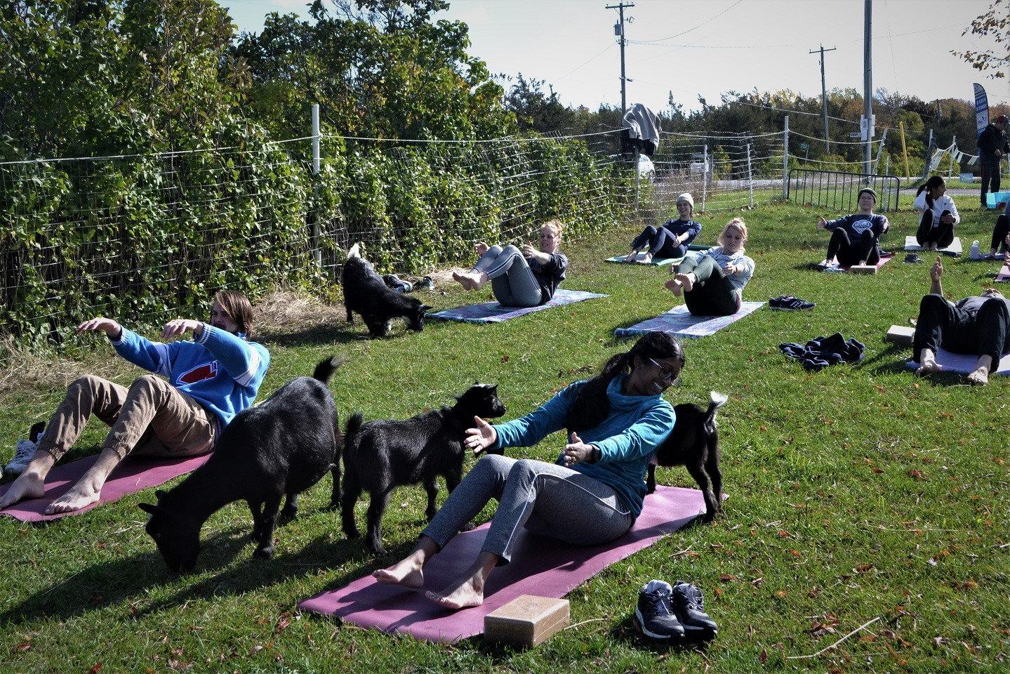 Private Goat Yoga Class