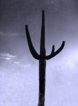 Saguaro #17