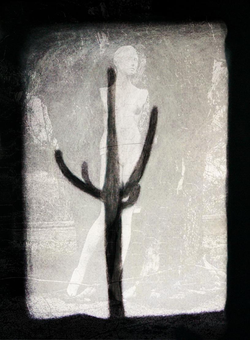 Saguaro #4