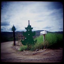 San Pedro Valley, Arizona 2005