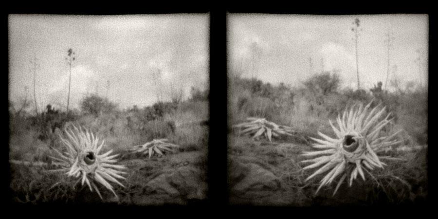 Desert Landscape Diptych