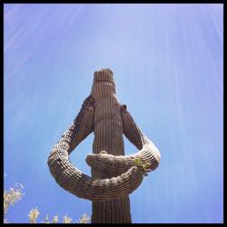 Saguaro #2