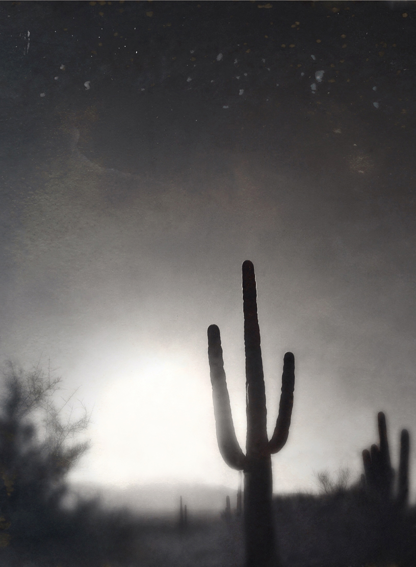 Saguaro #18