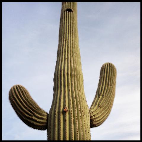 Saguaro #14