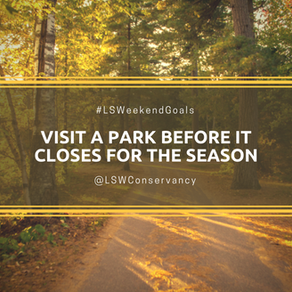Weekend Goals #1: Visit a Park in the Fall