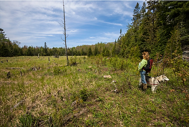 A beaver meadow on the preserve. ©GaryMcGuffin