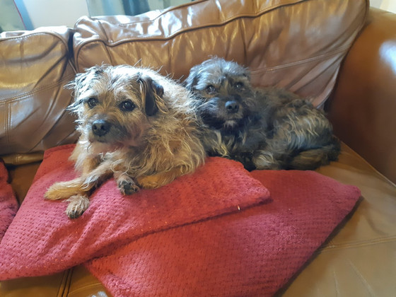 April Review - Pet Sitting 2020