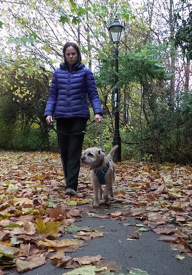 Dog Walk Woods Jo Perfect Petz Arlesey, Hitchin, Letchworth Arlesy