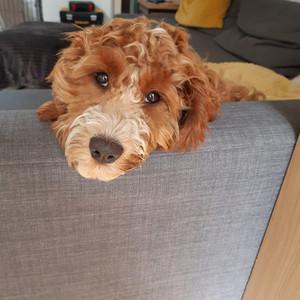 Pet Sitting Again