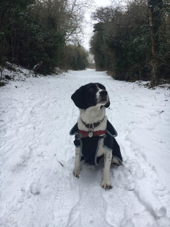 Snow on it's way
