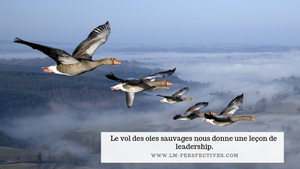 Le vol des oies sauvages nous donne une leçon de leadership.