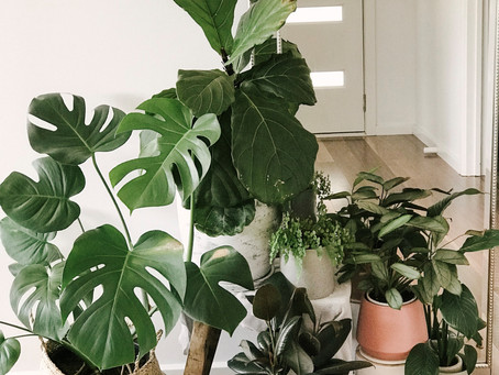 TIPS: CARING FOR YOUR INDOOR PLANTS IN WINTER