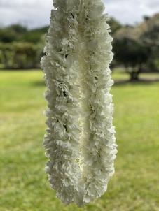 White Carnation Lei