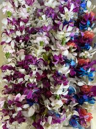 Single Combo Orchid Lei