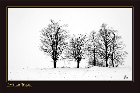 36 x 24 Print: Winter Trees