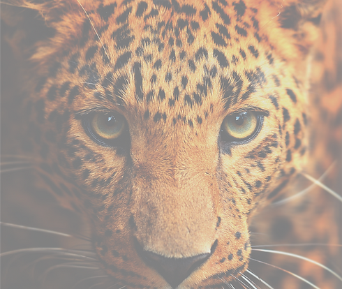 Gradient Master Leopard Photo.png