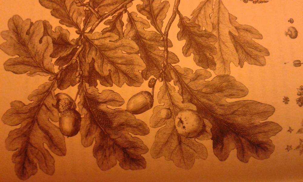 From little acorns, mighty oaks grow.