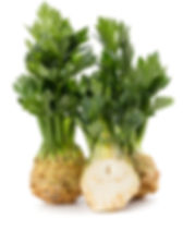 Fresh celery root with leaf isolated on