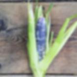 Blue Jade Corn.jpg