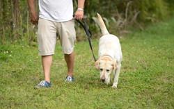 Arthurs Seat Adventure Park Dog Walking.jpg