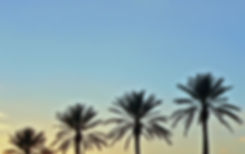 palm-trees-1395324.jpg