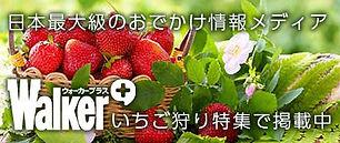 out_ban_ichigo.jpg