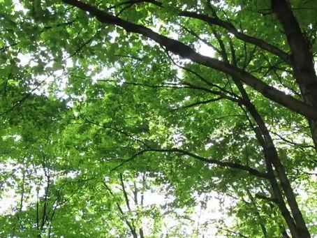 Ponderosa Woods | Type C Virtual Tour