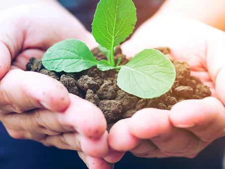 Como aplicar a sustentabilidade na sua marcenaria