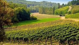 Дегустации вин в Гави